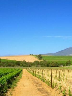 o-AFRICA-FARM-facebook